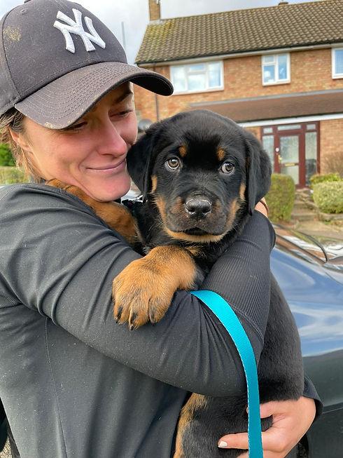 Dog Walker, Dog Walking, Hemel Hempstead