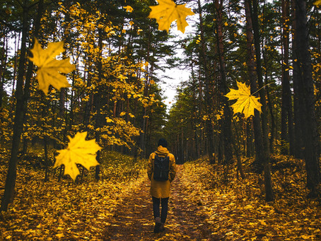 Crisp Autumn Walks at Exe Valley Glamping