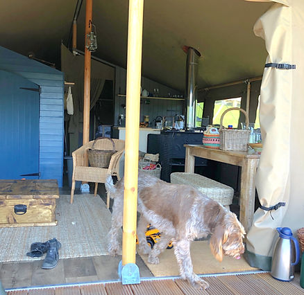 Dogs Welcome at Exe Valley Glamping