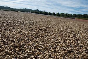 Fazenda Vila Boa - 04.jpg
