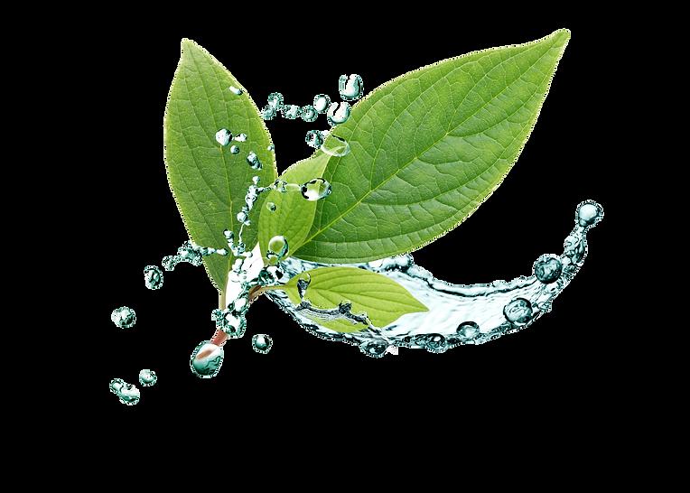 biovia-leaf.png