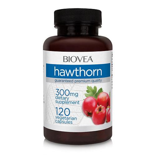 HAWTHORN 300mg 120 Vegetarian Capsules