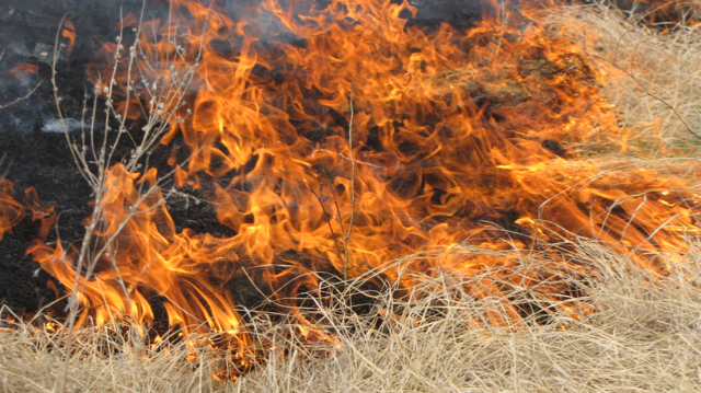 Flint Hills Burn IV