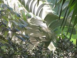 Tropical Foilage I