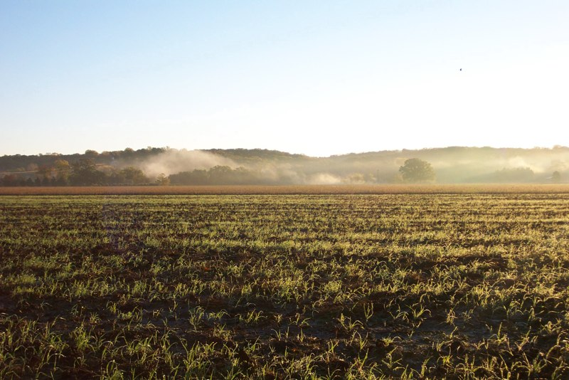 Morning Field with Mist