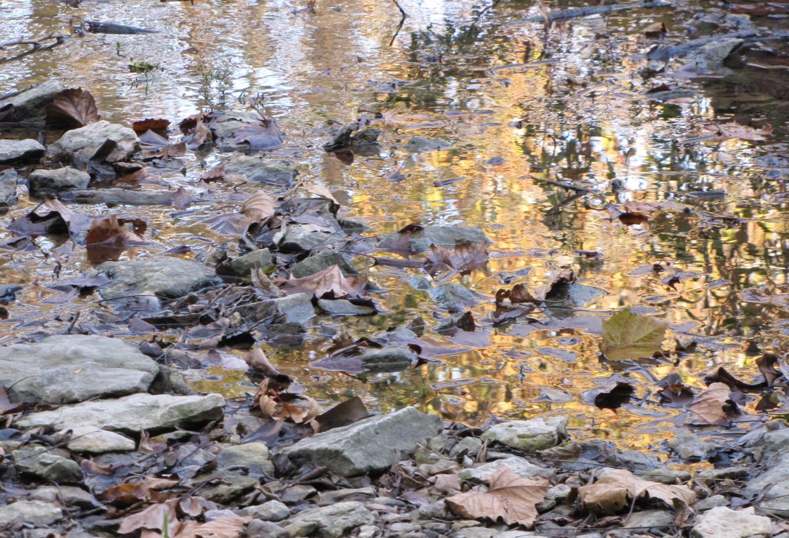 Rustic Waters II Hollis
