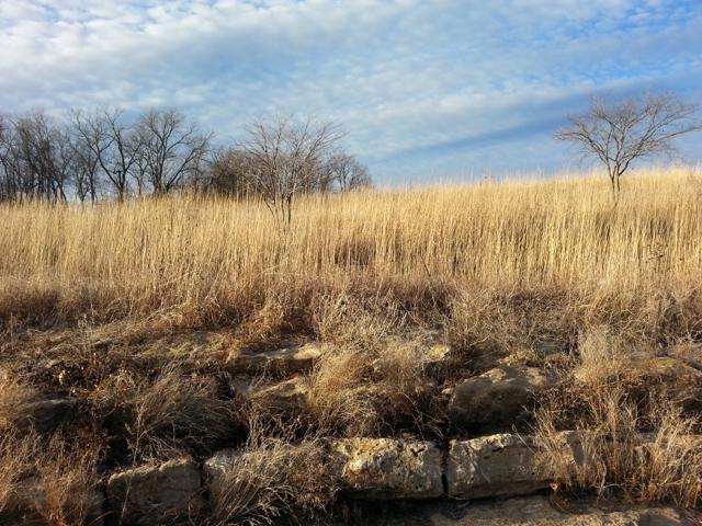 Rustic Field