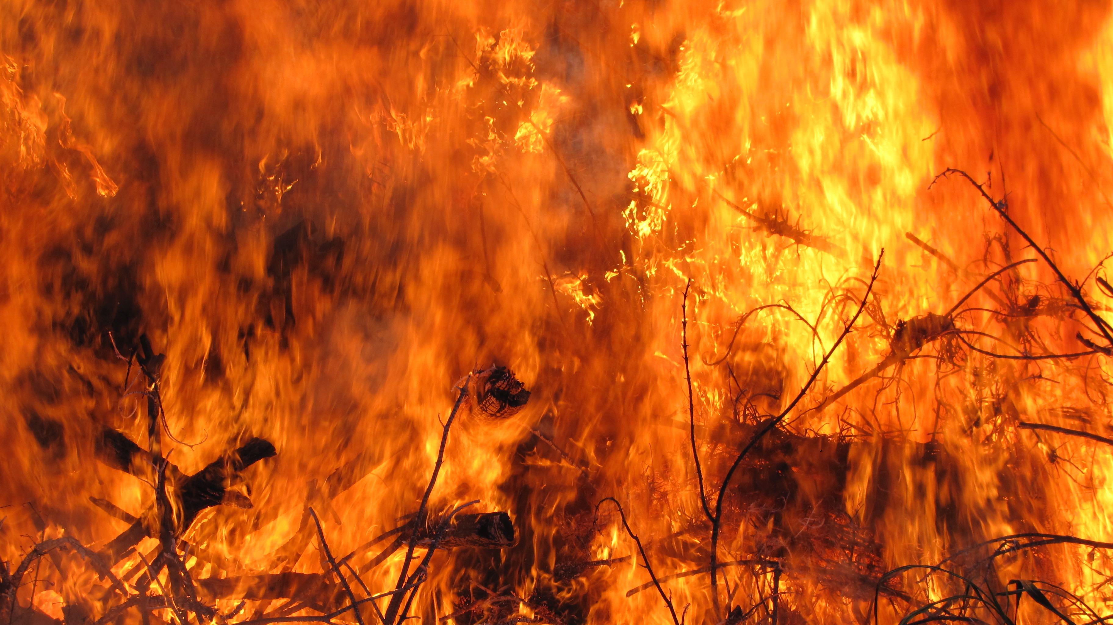 Bon Fire II
