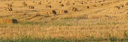 Hay Bales at Sunset II