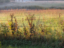 Colorful Wire Fence