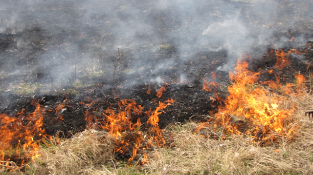 Flint Hills Burn I