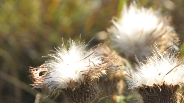 Fluffy Fall Buds II