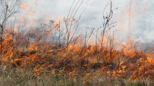 Flint Hills Burn II
