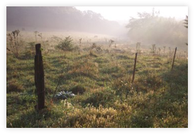 DCP_2338 rural fence-300 li_framed