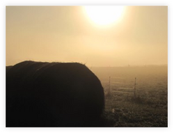 Golden Hay Bale in Fog