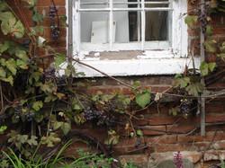 Rustic Vines II