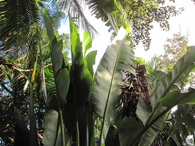 Tropical Foilage II