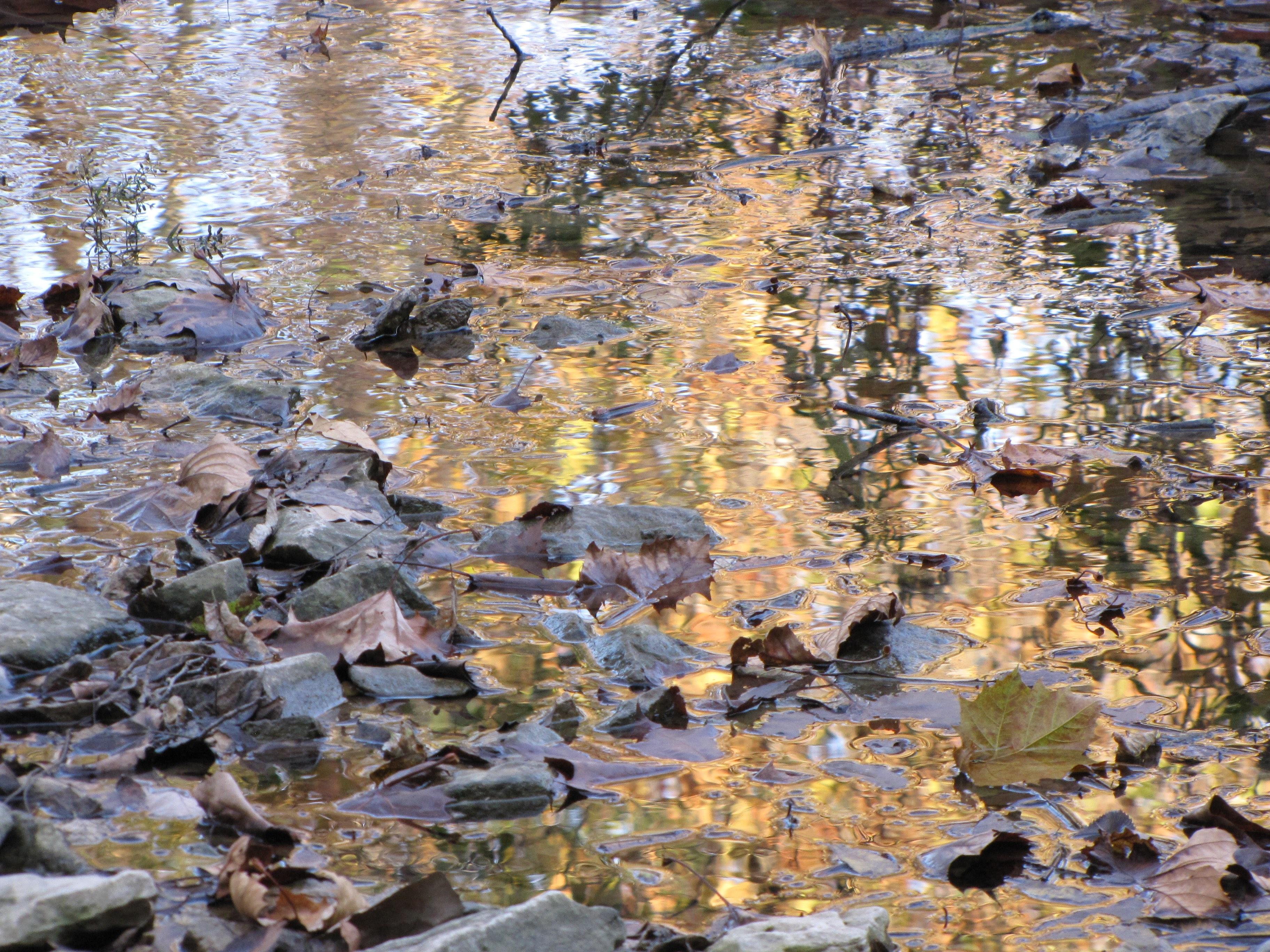 Rustic Creek I Hollis