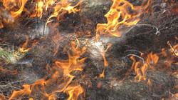 Flint Hills Burn V