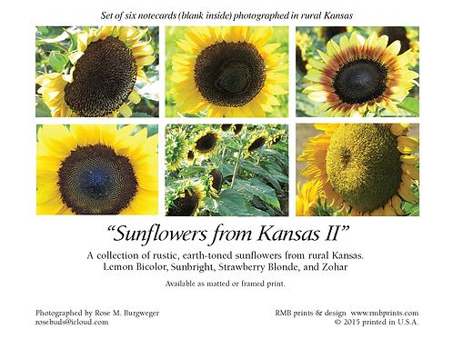 Kansas Sunflowers II