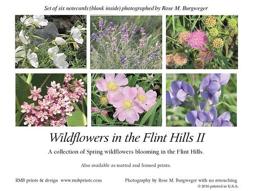 Wildflowers in the Flint Hills II