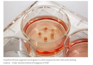Antidrepressivos na gestação: efeitos sobre a reprodução