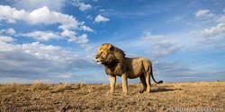 מכון אודיולוגי אריה