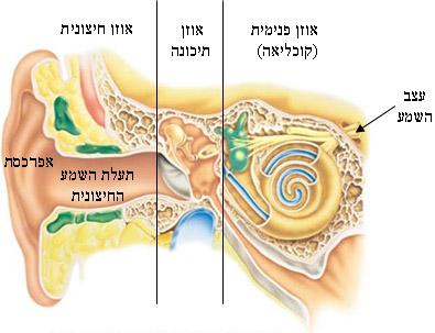 מבנה האוזן
