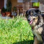 Cão-animais-férias-portugal-Crianças-quinta.jpg