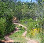 alentejo-turismo-rural-caminhada-natureza.jpg