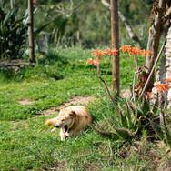 Monte-da-Choça-quinta-animals-nina.JPG