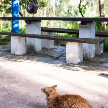 Familienfreundliche-Unterkunft-Ferienhaus-Bauernhof-Tiere-Huhn-Katze-Alentejo-Portugal-Kinder-Familie.jpg