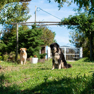 Monte-da-Choça-farm-animals-nina-flocki.JPG
