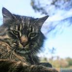 Monte-da-Choça-quinta-animais-gato.JPG
