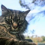 Monte-da-Choça-farm-animals-cat.JPG