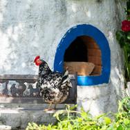 free-living-chicken-Monte-da-Choça-Alentejo-farm-portugal