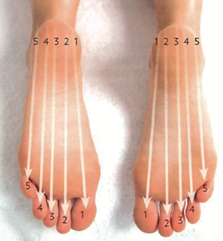 Aromatouche-pieds-méridiens-5zones-nyon.jpg