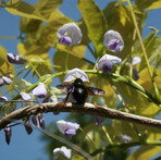 borboleta-quarto-alentejo-turismo-rural-caminhada-natureza.jpg