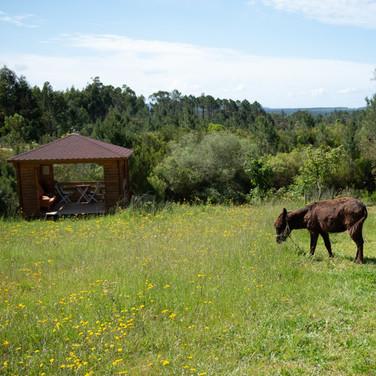 esel-Tiere-Ferien-Urlaub-Natur-ruhe-relaxen-grün-portugal.jpg