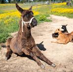 Burro-animais-férias-portugal.jpg