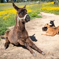 Donkey-animals-holidays-vacation-portugal.jpg