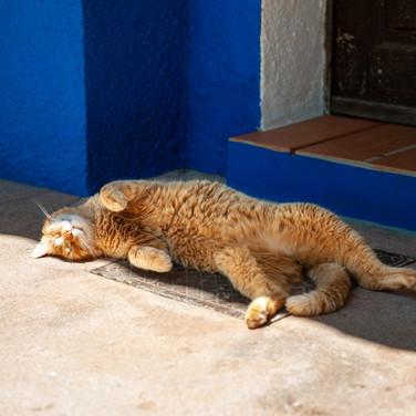 Familienfreundliche-Unterkunft-Ferienhaus-Tiere-Katze-Alentejo-Portugal-Kinder-Familie.jpg