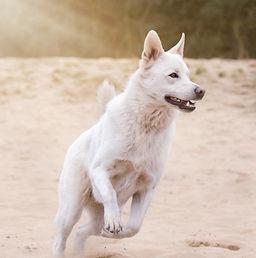 dog-1726407_1920_edited.jpg
