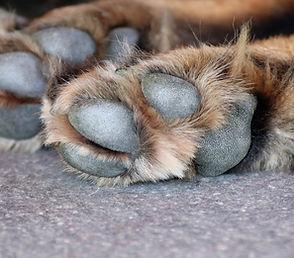 dog-paw-3612394_1920.jpg