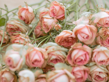 COMPETITION TIME!!  If free flowers be the food of love, read on....
