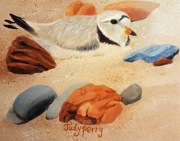 """""""Endangered"""" Piping Plover, Detail 24"""" x 24"""" - Sold"""