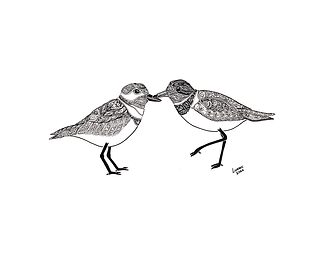 Lindsey - Plovers - 8+x+10+Plovers.png