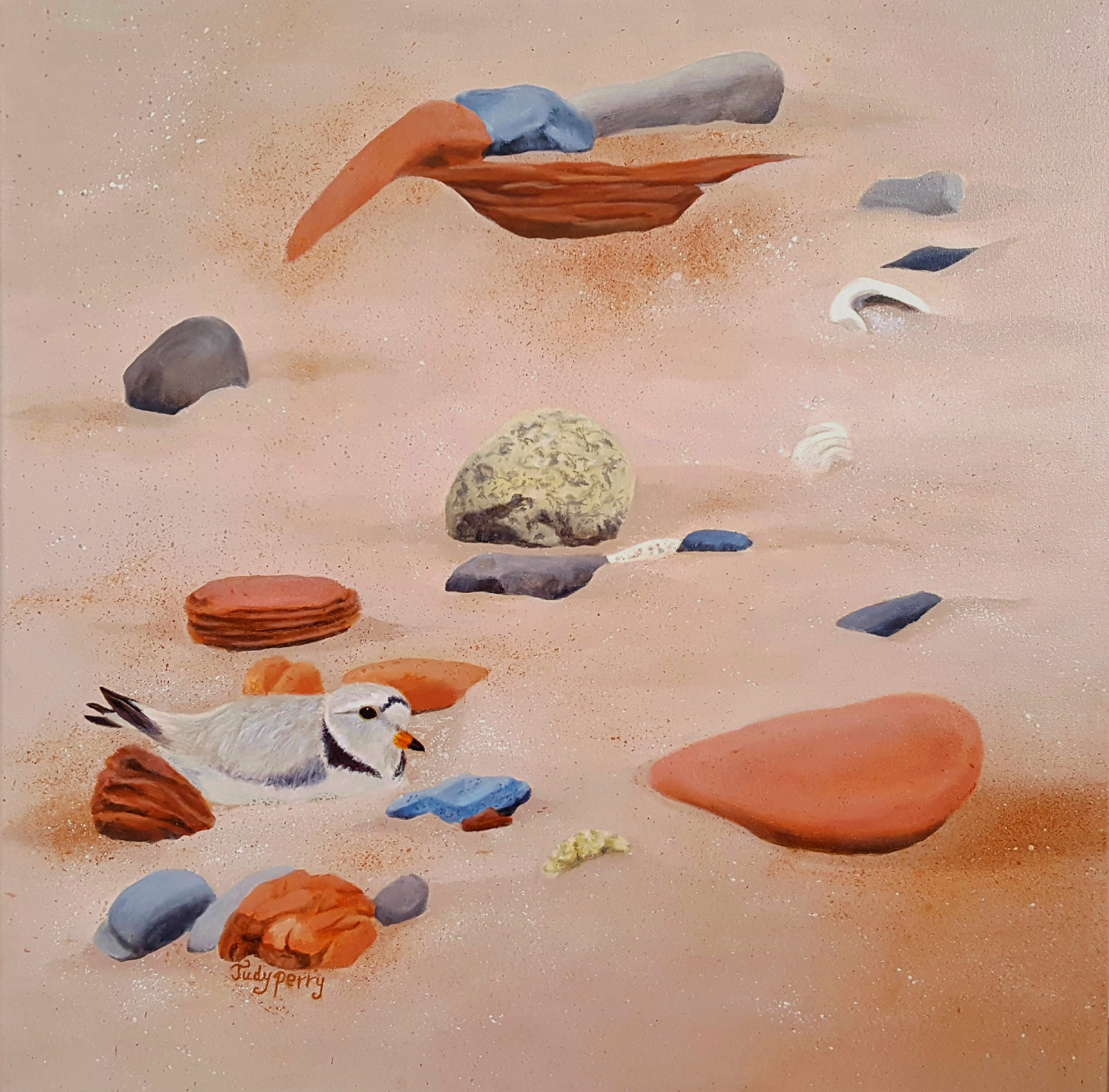 Endangered, Piping Plover - Sold