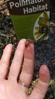 bee on finger.jpg