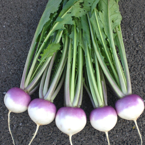 Turnip Sweetbell F1 Seeds (Pack of 250 seeds)